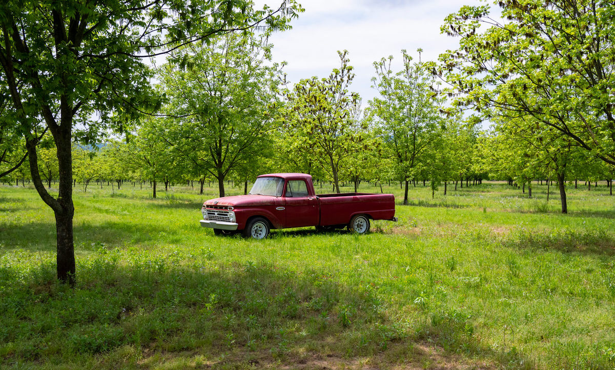 Picture of a vintage Ford pickup at Charlotte Teresa Plantation in Pope County