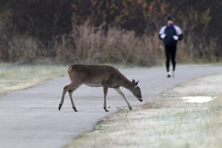 City Hall news: An urban deer hunt, demolition and who gets city business